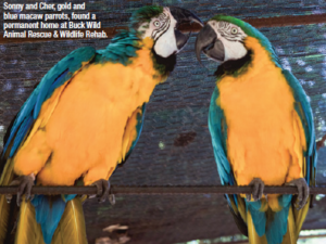 Sonny and Cher Macaw